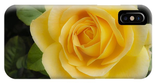 Angelic Rose IPhone Case