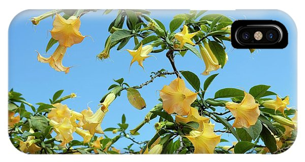 Yellow Trumpet iPhone Case - Angel's Trumpet (brugmansia X Candida) by Pascal Goetgheluck/science Photo Library