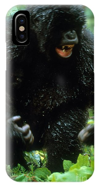 Angry Mountain Gorilla IPhone Case