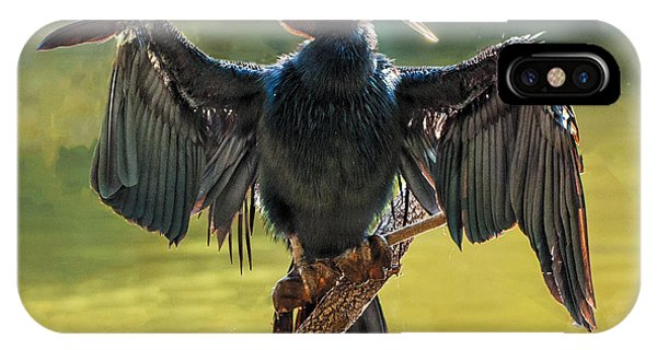 Anhinga Drying His Wings IPhone Case