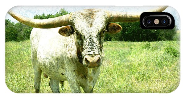 animals - cows -Longhorn in Summer Pasture IPhone Case