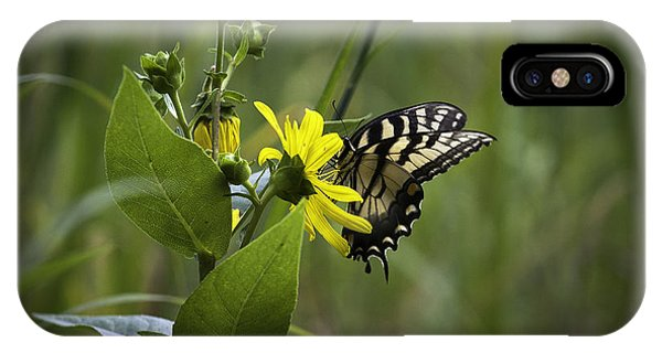 Anise Swallowtail 001 IPhone Case