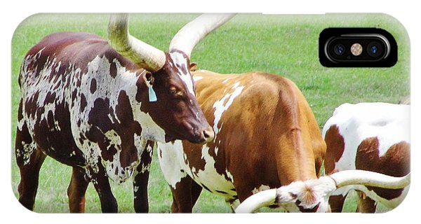 Ankole And Texas Longhorn Cattle IPhone Case