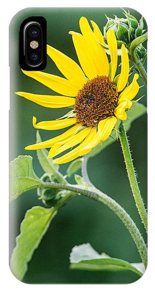 Annual Sunflower IPhone Case