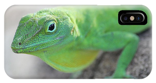 Anole IPhone Case