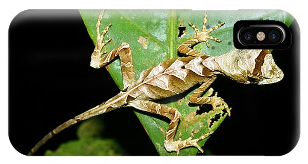 Anolis Lizard Phone Case by Dr Morley Read/science Photo Library