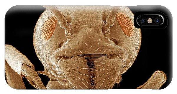 Behaviour iPhone Case - Ant Head by Thomas Deerinck, Ncmir