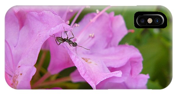 Ant On Flower IPhone Case