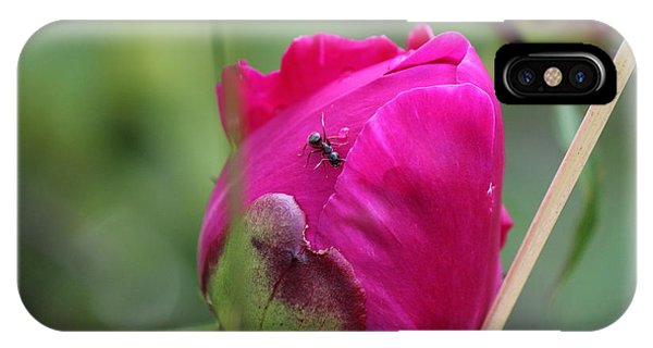 Ant On Peony IPhone Case