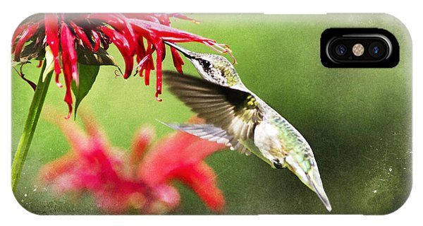 Close Up Floral iPhone Case - Antique Hummingbird Postcard No. 1124 by Christina Rollo