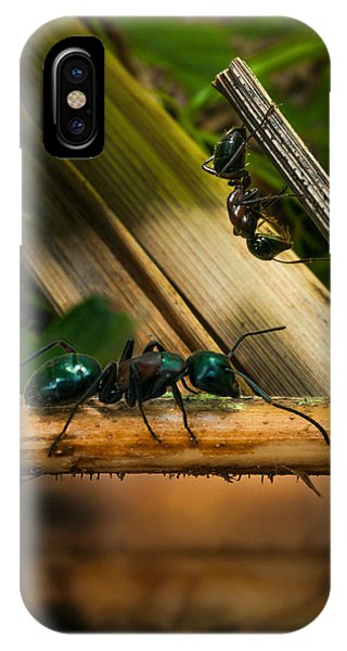 Ant iPhone Case - Ants Adventure 2 by Bob Orsillo