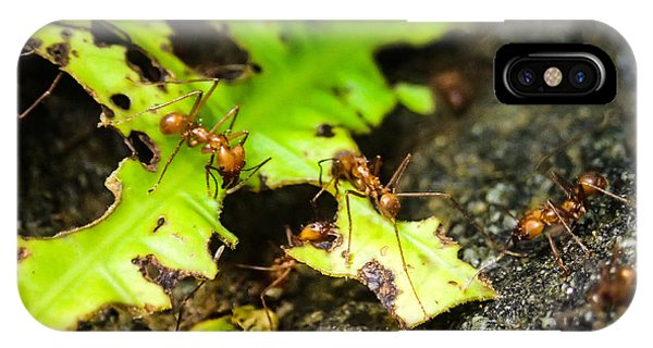 Ants At Work IPhone Case