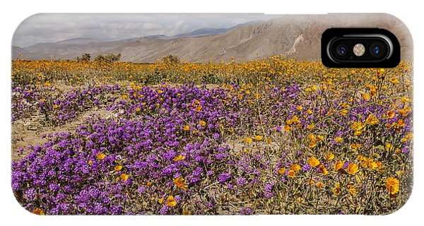 Anza-borrego Wildflowers 25 IPhone Case