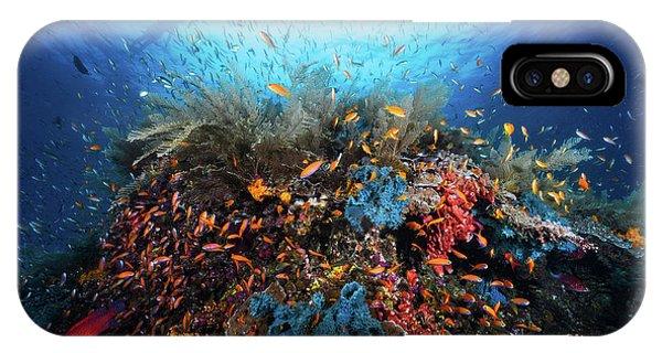 Surface iPhone Case - Apnea by Barathieu Gabriel