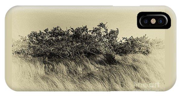 Apollo Beach Grass IPhone Case
