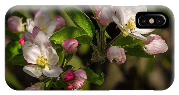 Apple Blossom 3 Phone Case by Carl Engman