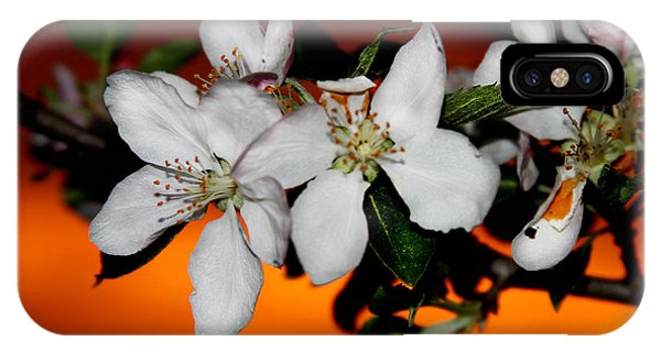 Apple Blossom Sunrise I IPhone Case