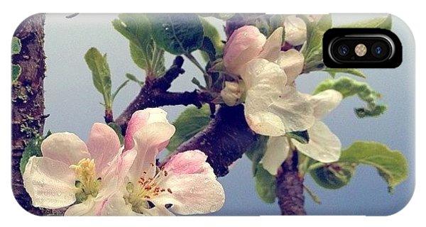Flower iPhone Case - Apple Blossoms Right Outside My Studio by Blenda Studio