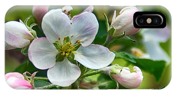 Apple Blossom And Buds IPhone Case