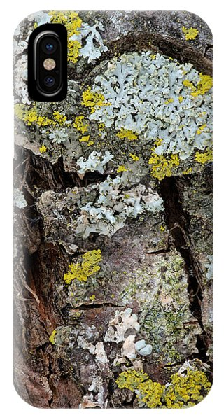 Apple Tree Lichens IPhone Case