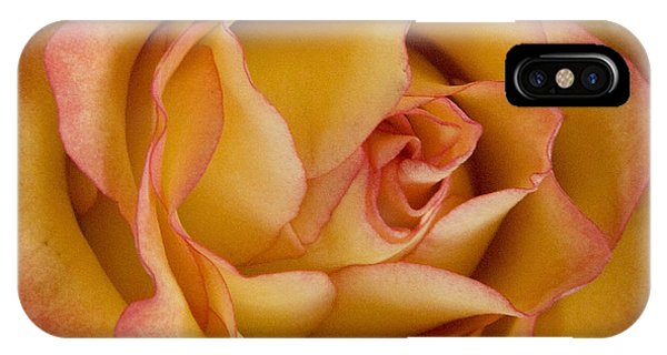 Apricot Rose IPhone Case