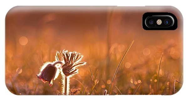 April Morning IPhone Case