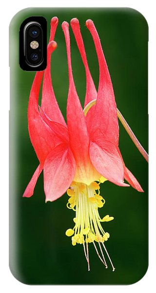 Aquilegia iPhone Case - Aquilegia Canadensis 'little Lanterns' by Geoff Kidd/science Photo Library