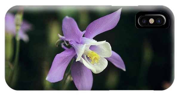 Aquilegia iPhone Case - Aquilegia by Mrs W D Monks/science Photo Library