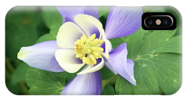 Aquilegia iPhone Case - Aquilegia 'spring Magic Blue And White' by Ian Gowland/science Photo Library