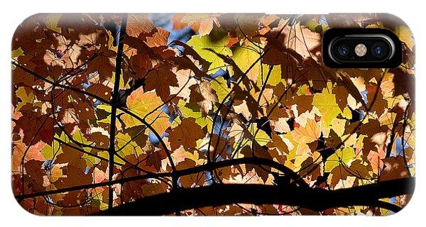 Arboretum Fall IPhone Case