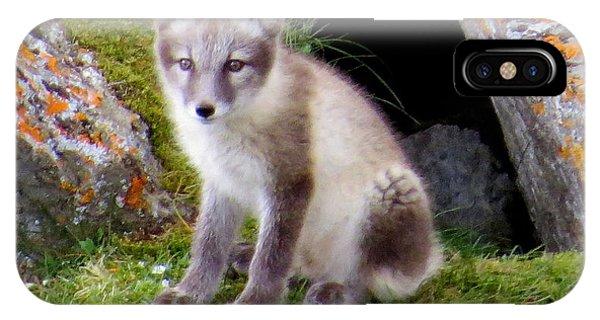 Arctic Fox Cub IPhone Case