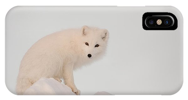 Winter iPhone Case - Arctic Fox Stands In Late Afternoon Sun by Tom Soucek