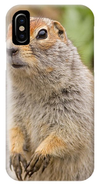 Arctic Ground Squirrel Close-up IPhone Case