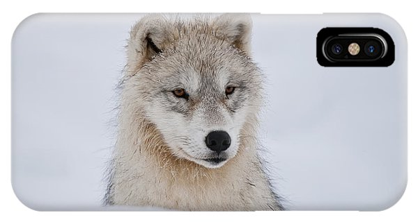 Arctic Pup In Snow IPhone Case
