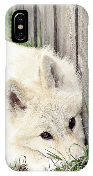 Arctic Wolf Phone Case by Kathy Eastmond
