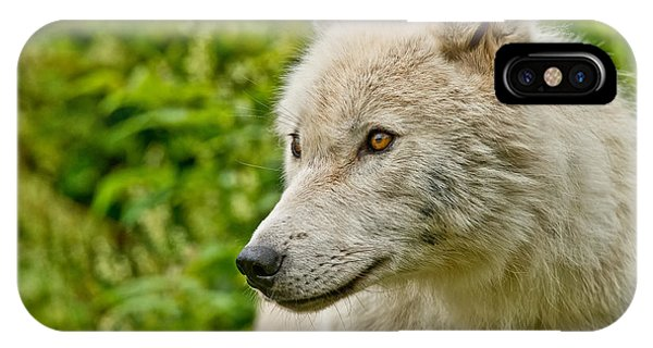 Arctic Wolf Pictures 241 IPhone Case
