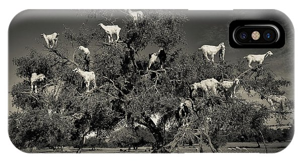 Humor iPhone Case - Argan Loving Goats by Dario Puebla