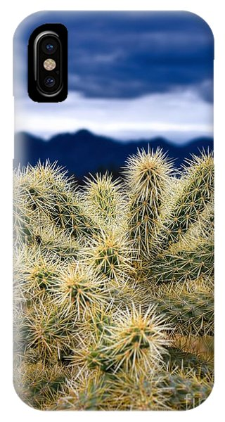 Teddy Bear Cholla iPhone Case - Arizona Teddy Bear Cactus by Henry Kowalski