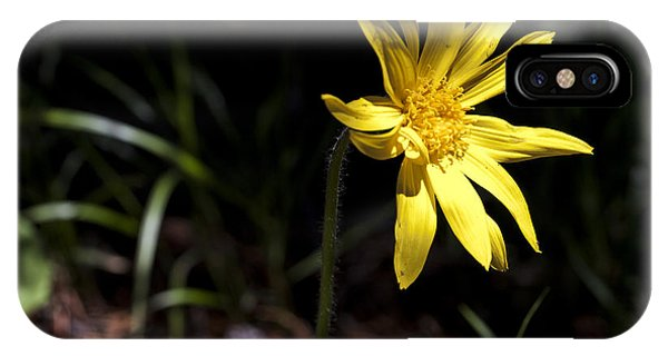 Arrow Leaf Balsamroot IPhone Case