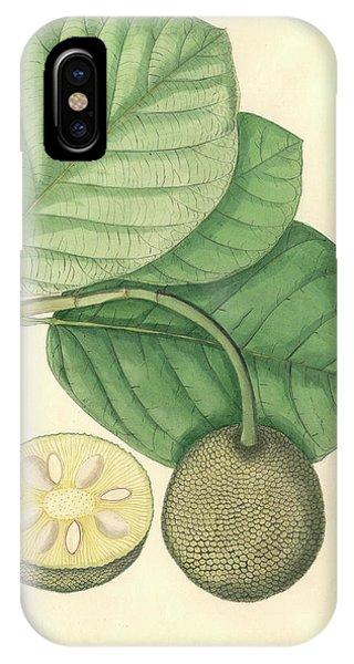 Artocarpus Chaplasha IPhone Case