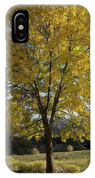Ash (fraxinus Excelsior) Tree In Autumn Phone Case by Bob Gibbons