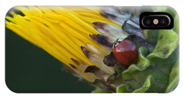 Asian Ladybug On Mock Sunflower IPhone Case