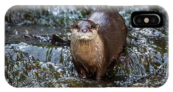 Asian Small-clawed Otter IPhone Case