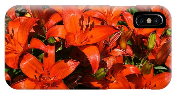Asiatic Lily IPhone Case