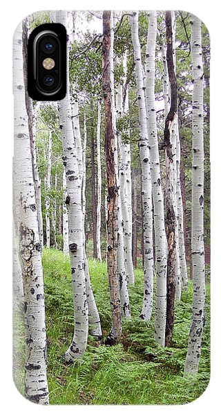 Aspen Forest IPhone Case