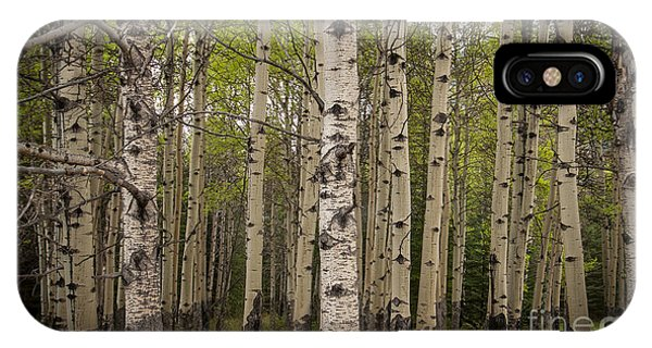 Aspen Grove IPhone Case