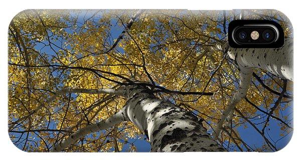 Fall Aspen IPhone Case