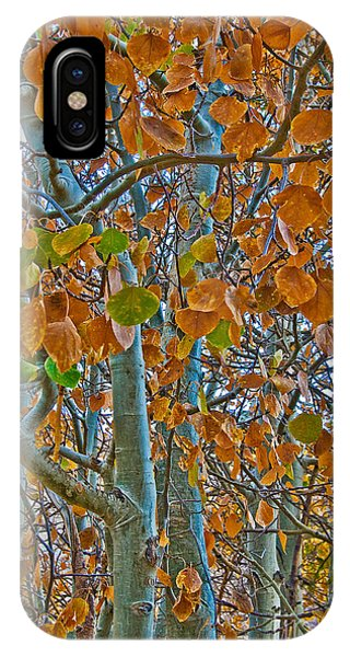 IPhone Case featuring the photograph Aspen Leaves In The Fall by Mae Wertz