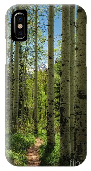 Aspen Lined Hiking Trail Phone Case by Mitch Johanson