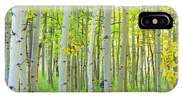 Aspen Tree Forest Autumn Time  IPhone Case